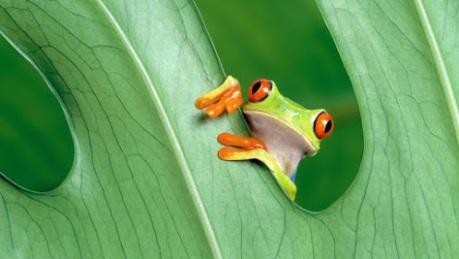 frog-on-leaf-animals-on-google-plus